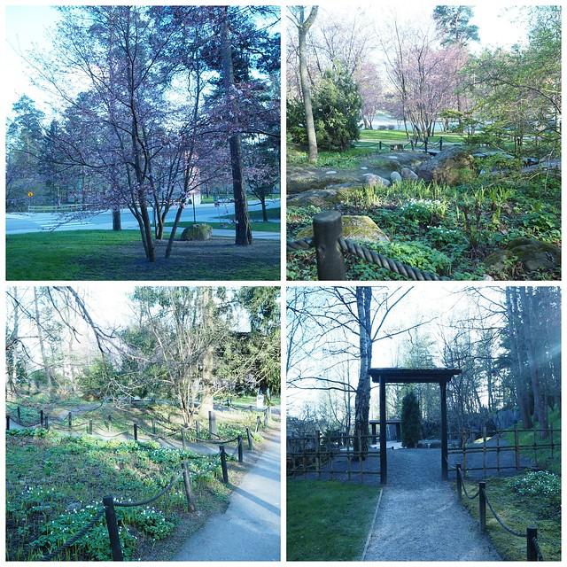 kirsikkapuistoroihuvuori3kirsikankukka1, kirsikkapuisto, roihuvuori,helsinki, visit helsinki, tip helsinki, japanese style garden, cherry park, kirsikkapuisto, japanilaistyylinen puutarha, hanami, sakura, kirsikankukat, cherry blossom, vinkit, kukat, luonto, pinkki, vaaleanpunainen, kaunis, puutarha, puisto, itä-helsinki, japani, kukat,