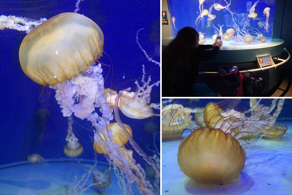 022415_aquarium04