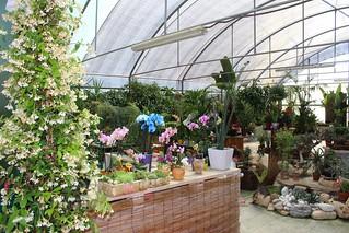 Noicattaro. Flowers Days 2015 front