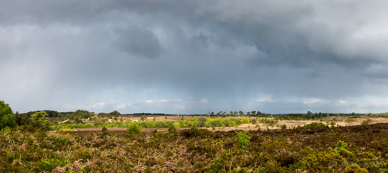 Panorama over Canford Heath