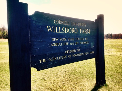 My latest learning opportunity: Field Assistant at the Cornell Research Farm in Willsboro
