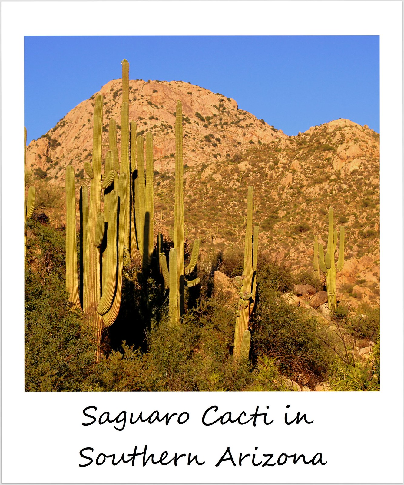 polaroid of the week usa arizona saguaro cacti