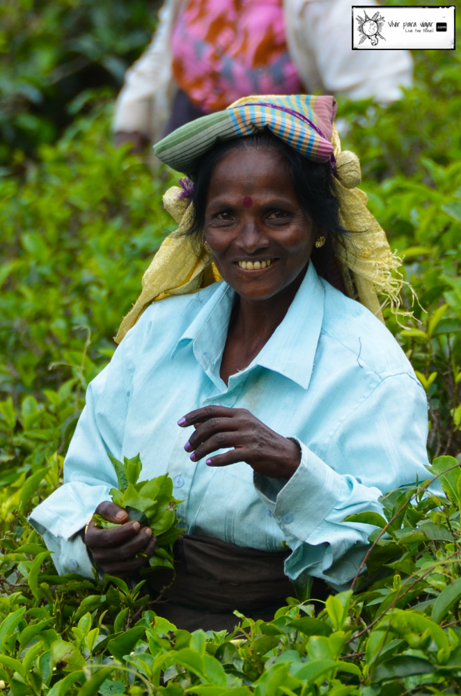 tea-plantation-sri-lanka-4628