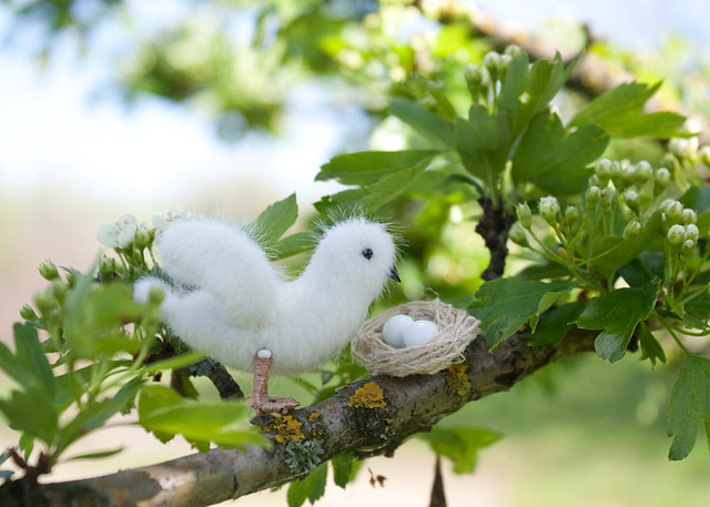 white dove and nest