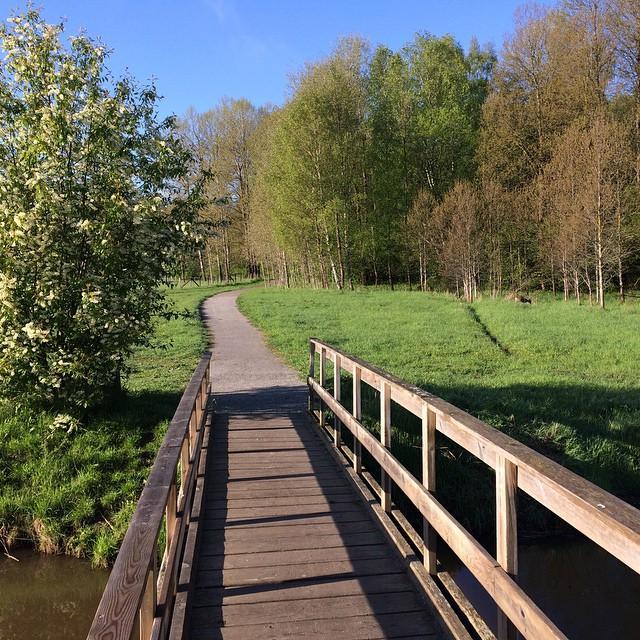 Morgonpromenad till jobbet feat bro, hägg, rådjur, blå himmel mfl.