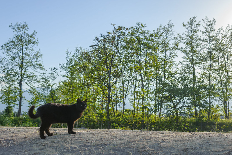 Black Cat in the Riverside.