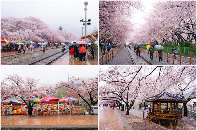 Sakura Station