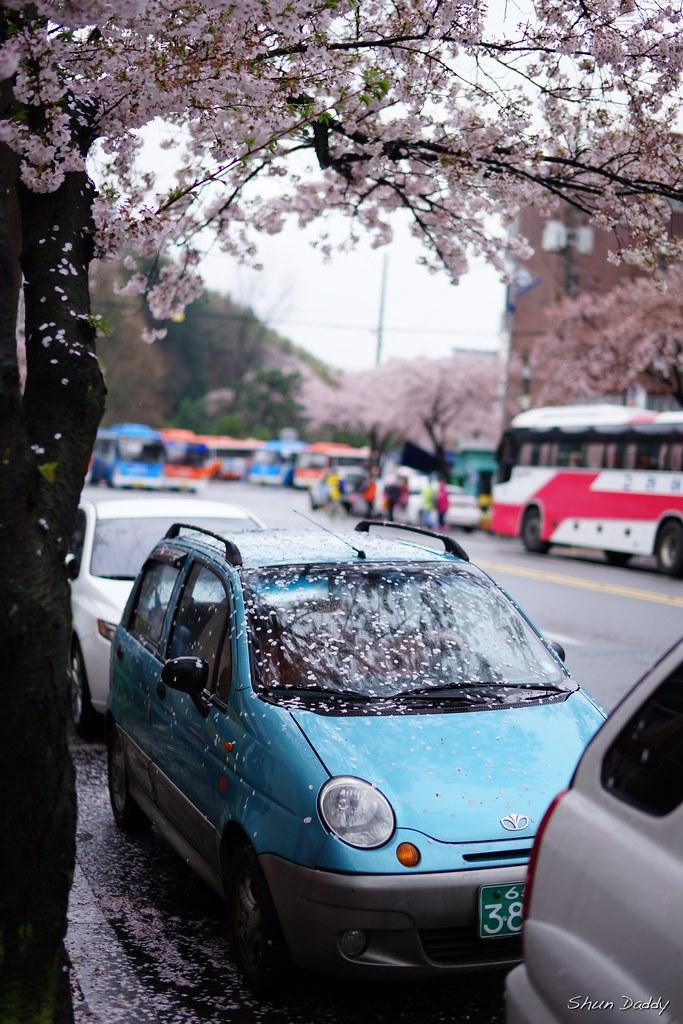 Sakura Car