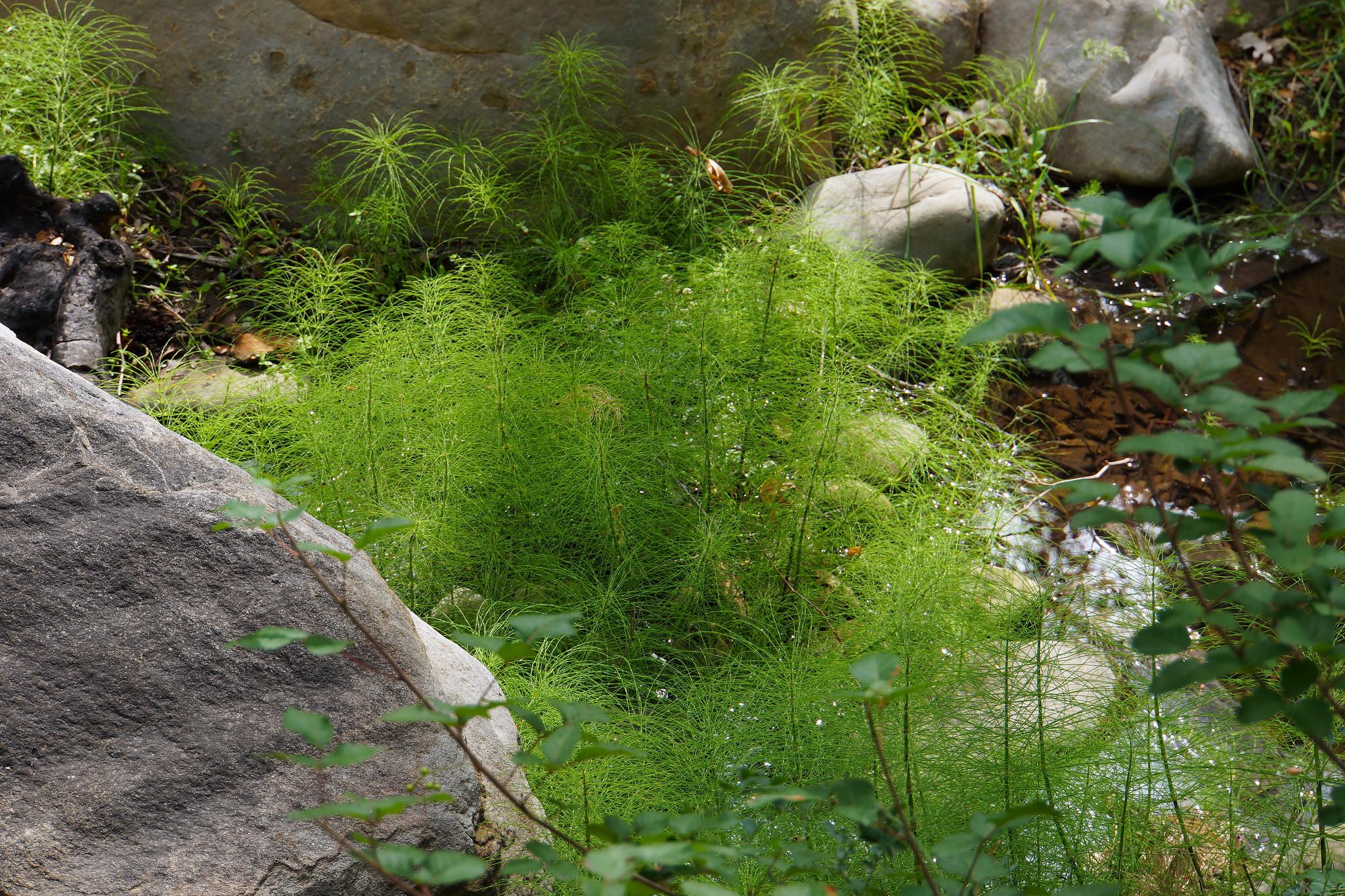 20150518_an Creekbed