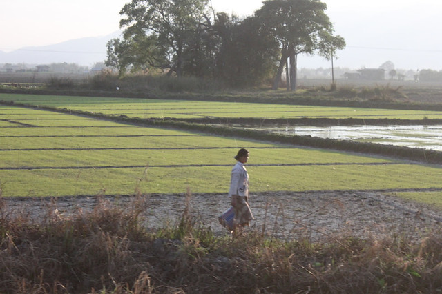 20150212_4641-Inle-ricefields_resize