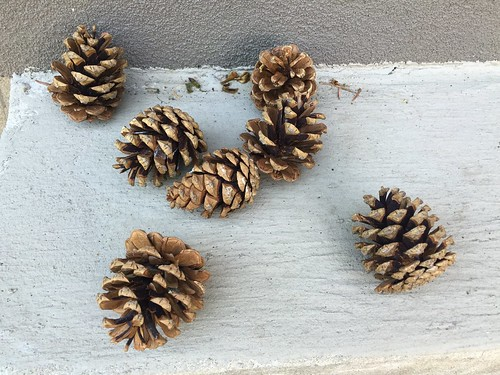 Pinecones: open