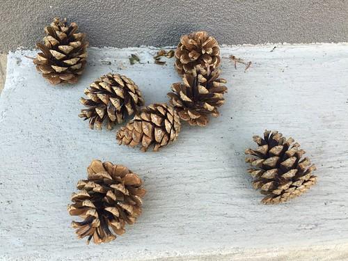 Pinecones: open