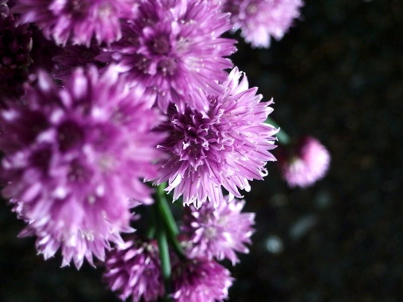 Chive bouquet