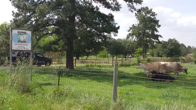 Gramen Farm 3