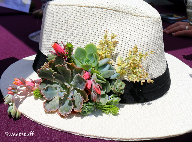 It's Time For The Succulent Celebration 2015
