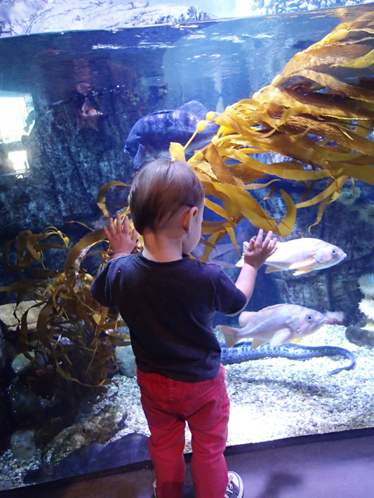 022415_aquarium02