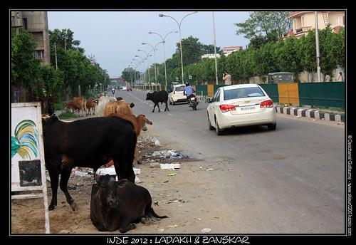 JOUR 2 : 29 JUILLET 2012 : DELHI - CHANDIGARH