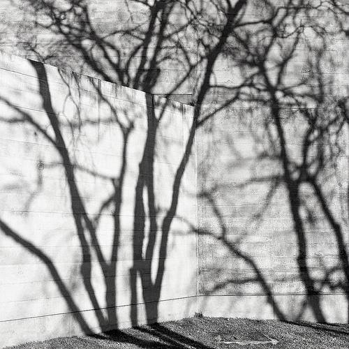 """Inspiração: """"A sombra da árvore"""""""