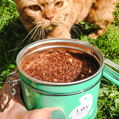 lovely organic rooibos almond tea from løv tea, june 2015 - so good even cats fight for it