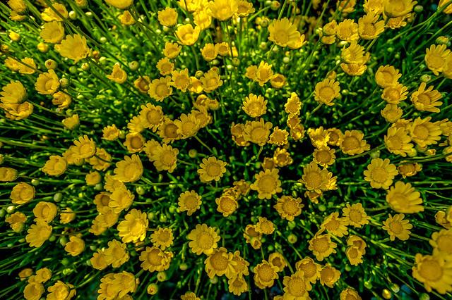 201505_flower10.jpg