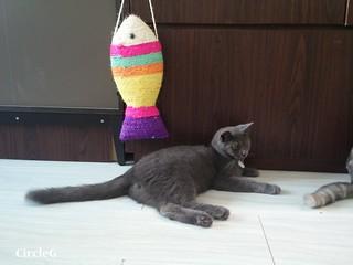 CIRCLEG CAT CAFE 貓貓地 香港 旺角 COOKING HEYHEY (4)