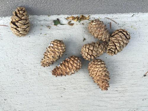 Pinecones: closed