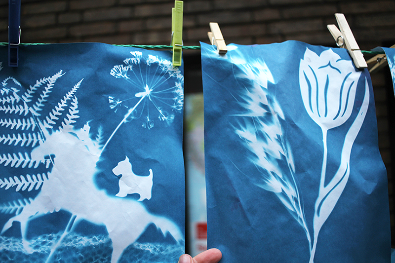 kids cyanotypes sm
