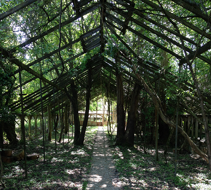 Derelict greenhouse