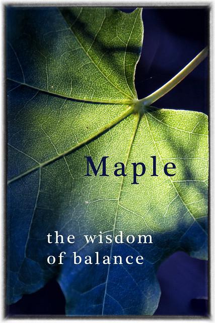 IMG_1319 Maple