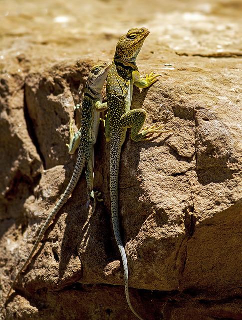 Lizard 2 7d_1979