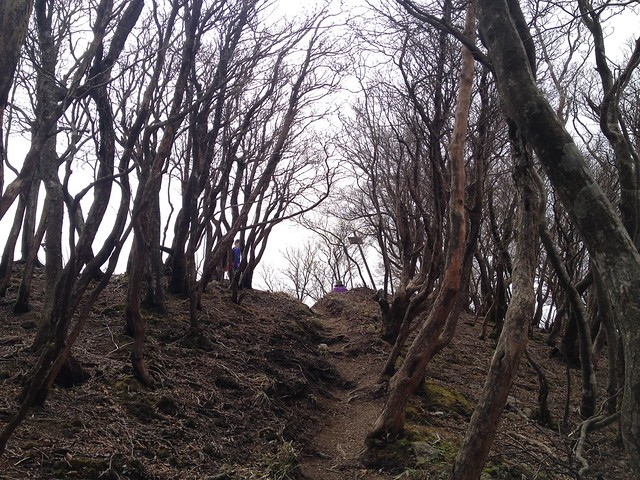 釈迦ヶ岳 頂上直前