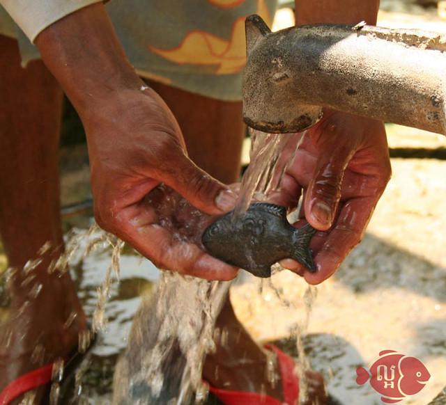 Cá bằng sắt cứu người thiếu máu
