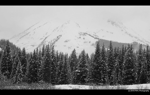 Mt. Bellview