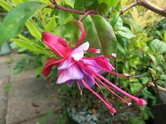 leaf-flower