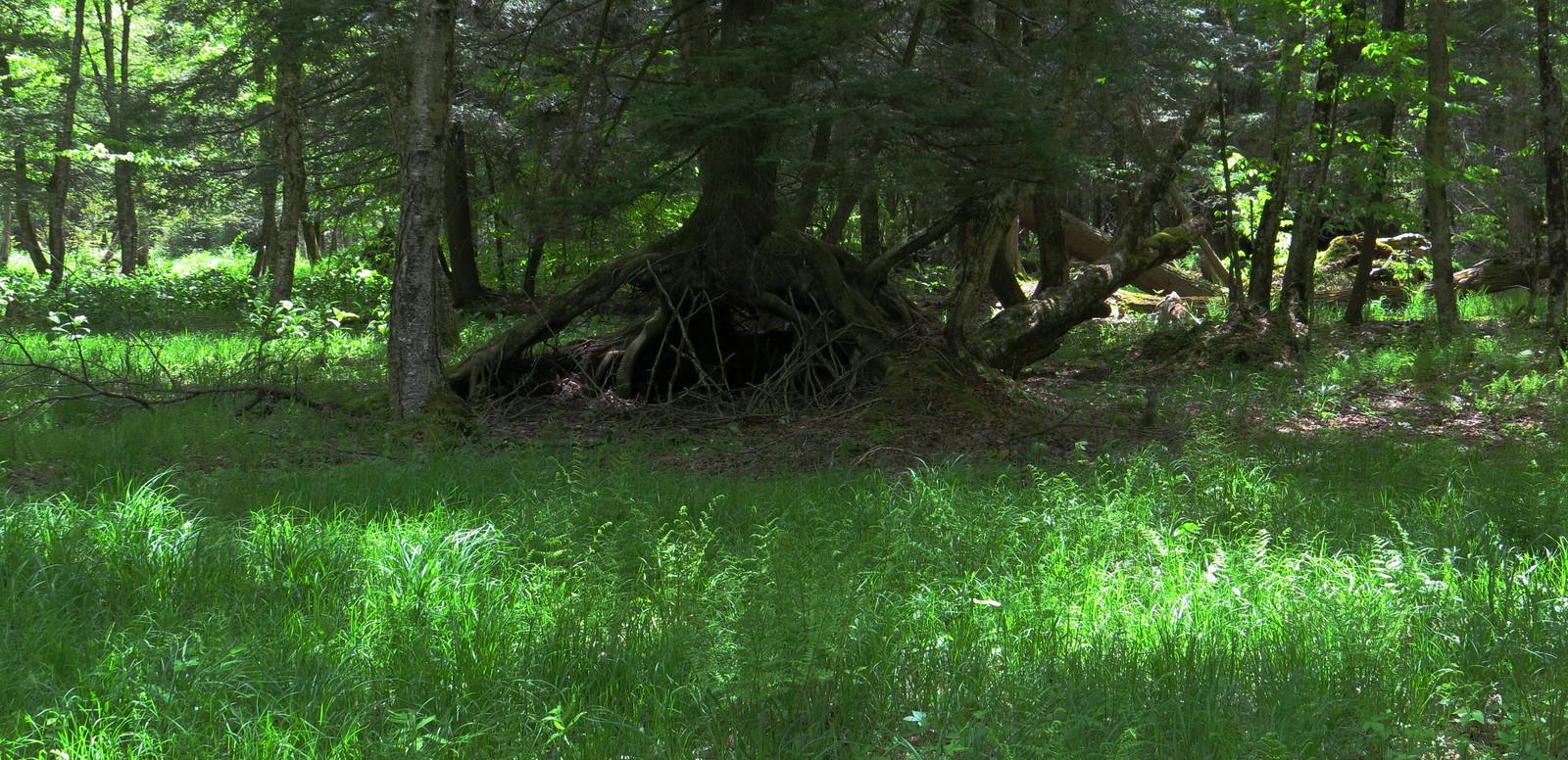 Mongaup Pond, NY
