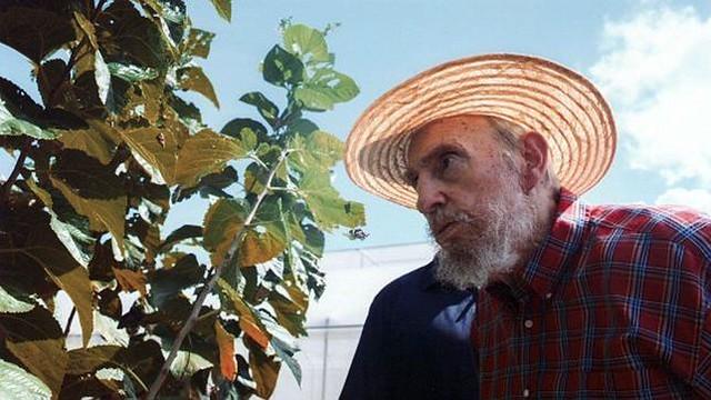 El Arbol Milagroso de Fidel