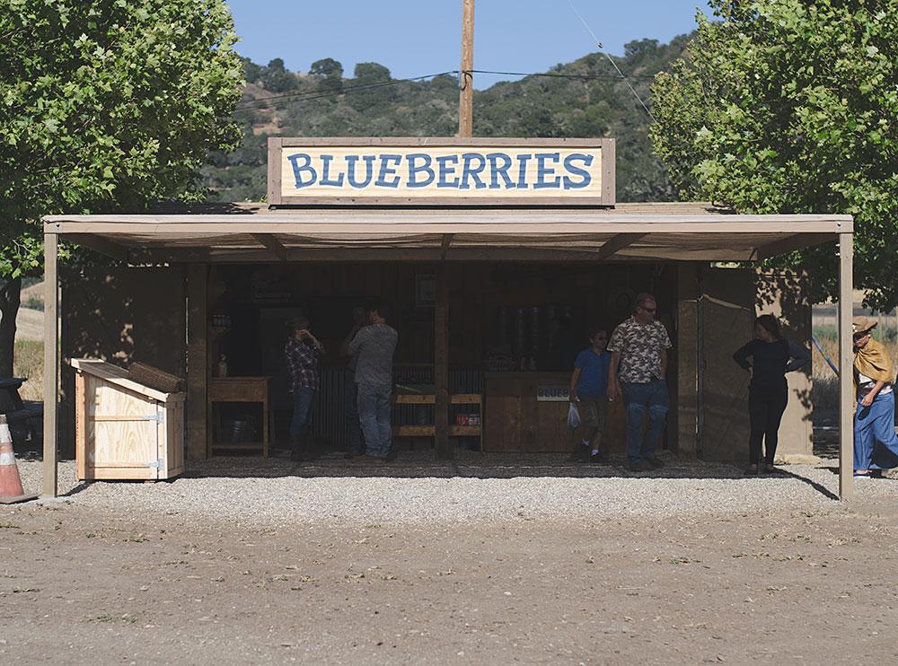 Santa Barbara Blueberrie