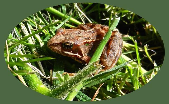 Young Frog DSCN4557