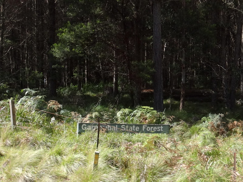 Gambubal State Forest