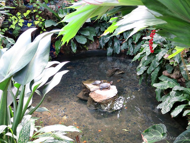 LincolnParkConservatory05