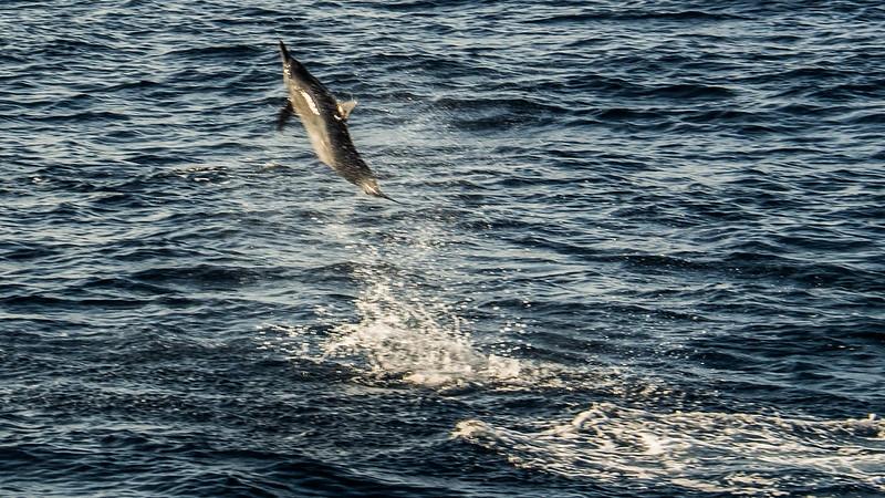 P4253645 Vagamundos 16 Mirissa avistamiento ballenas