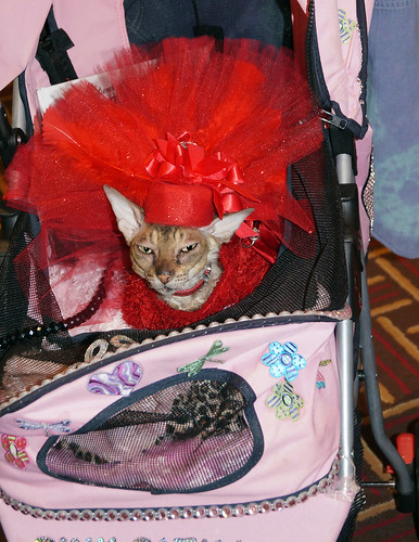 blogpaws-cococoutureC01322