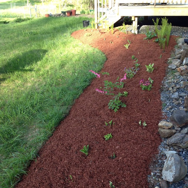 Widened, weeded and mulched. Hostas are slowly making their way up.