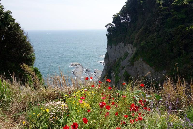 江の島の崖に咲く花