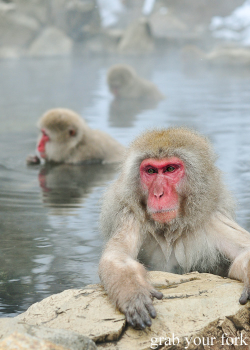 Snow monkeys in the outdoor onsen at Jigokudani Monkey Park, Nagano