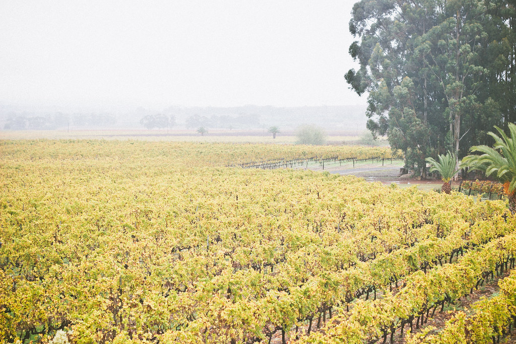 {south african wine district} via chevrons & éclairs