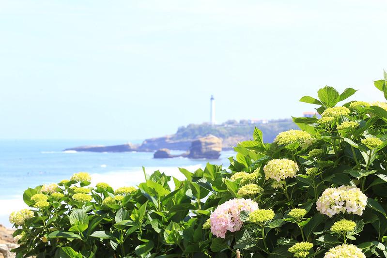 flowers-biarritz