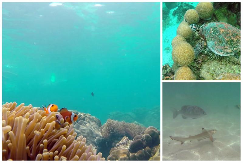 Snorkelling at Payar Island
