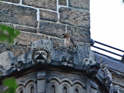 Cathedral Hawk Nest - 0206
