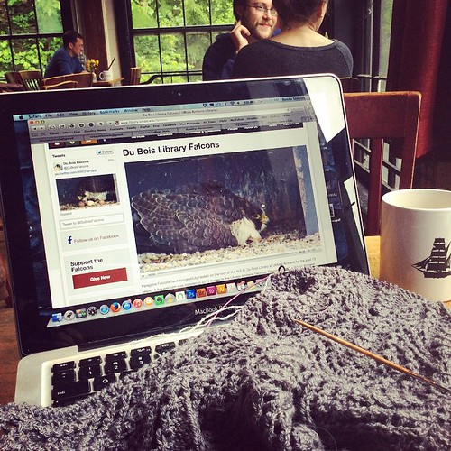 Rainy morning lace knitting and falcon mama watching. One egg has hatched, three to go! #umassfalcons #bluepeninsula #knit #knitlace #knitting #knittersofinstagram #knitstagram